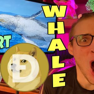 Dogecoin Whales MAKING HUGE MOVES ⚠️